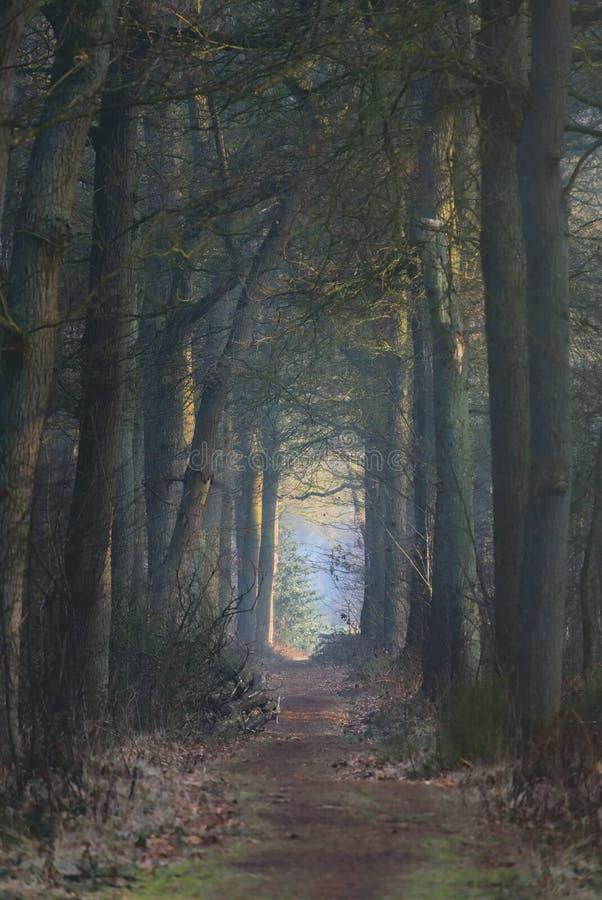 Weg zwischen Bäumen mit schönem Sonnenaufgang in den dunklen Vorderteilen stockfotos