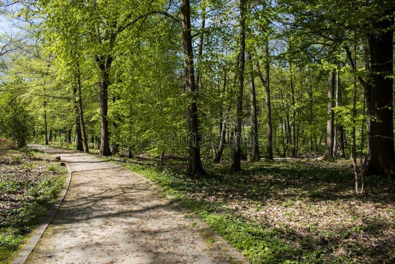Wegabflussrinne Romberg-Park in BrÃ-¼ nninghausen, das ein Teil des europäischen Garten-Erbnetzes ist stockfotografie
