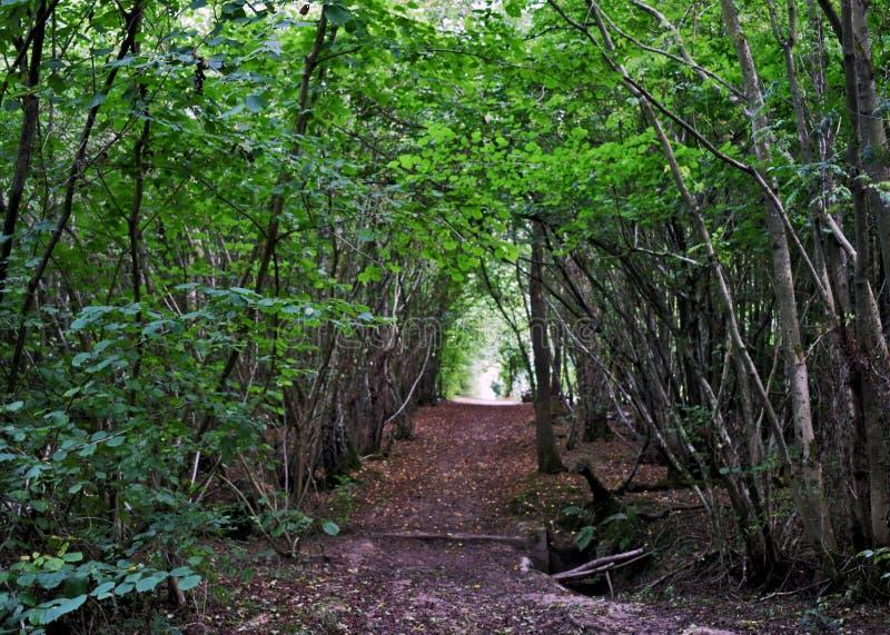 Wegbetrieb durch die Mitte des Waldbereichs in Kent England lizenzfreie stockbilder