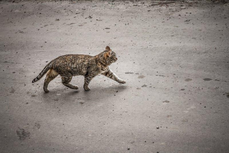Wege einer Katze entlang der Straße allein lizenzfreie stockfotos