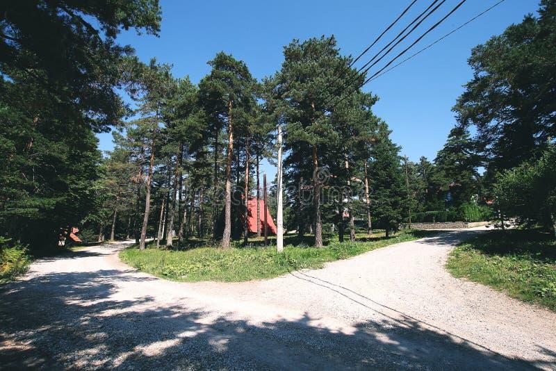 Wegen door bos in de zomer royalty-vrije stock foto