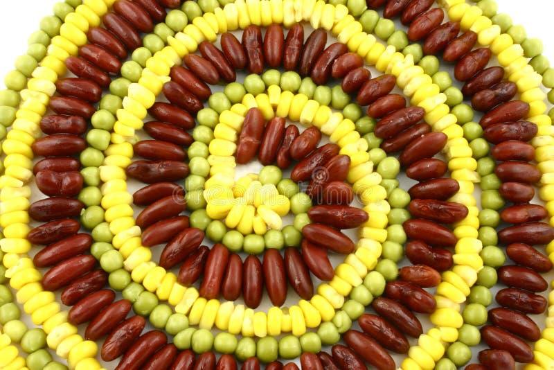 wegetarianin ślimakowaty zdjęcie royalty free