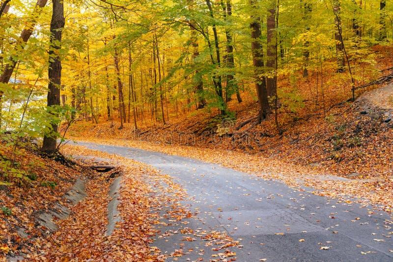 Wegkrommen door de herfstbomen royalty-vrije stock foto's