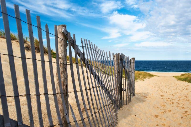 Wegmanier aan het strand in Cape Cod stock foto