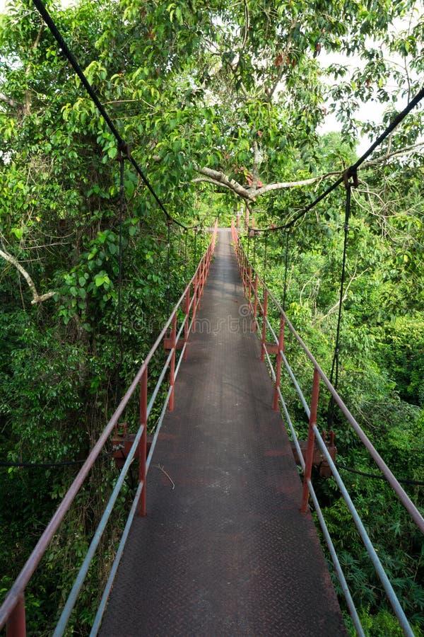 Download Wegspur über dem Baum stockfoto. Bild von wandern, schönheit - 27732784