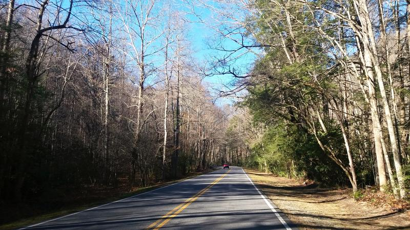 Wegstandpunt door het bos stock foto