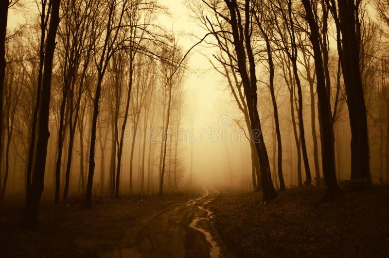 Wegtrog een donker eng surreal bos met mist stock afbeelding