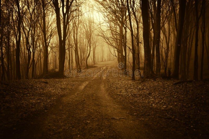 Wegtrog een vreemd donker bos met mist in de recente herfst royalty-vrije stock fotografie