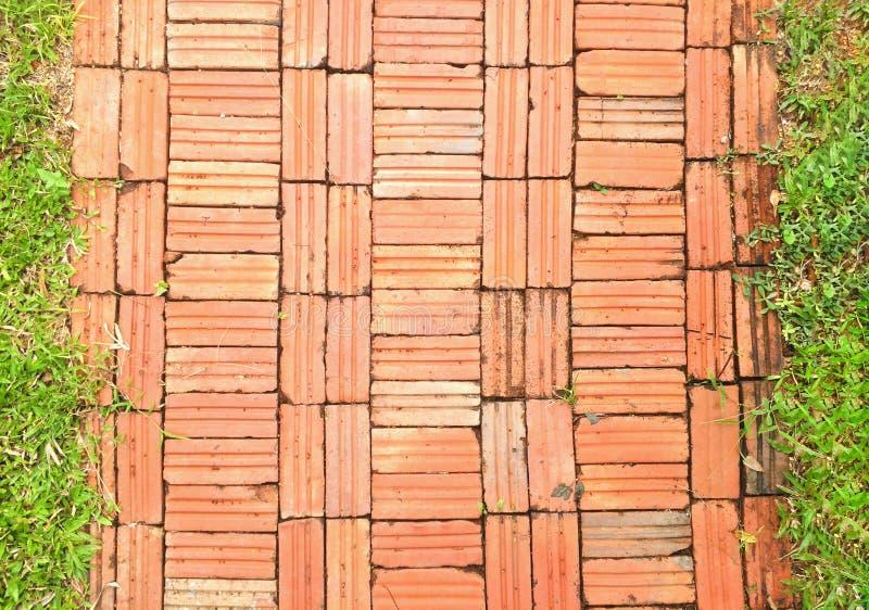 Wegweisenziegelsteine mit Gras auf zwei Seiten und natürlichem Wandmuster stockfotografie