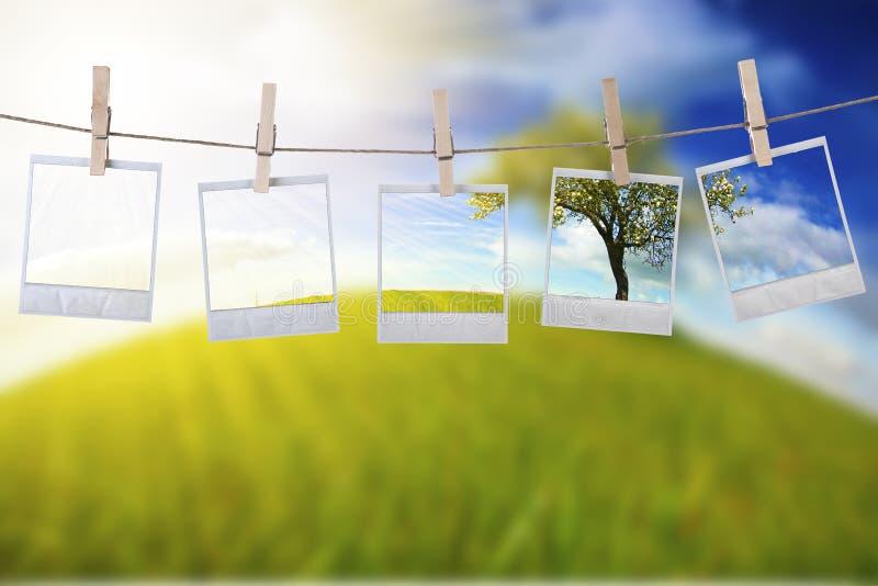 Wegwerfbare Fotofelder, die im Seil hängen lizenzfreie stockfotografie