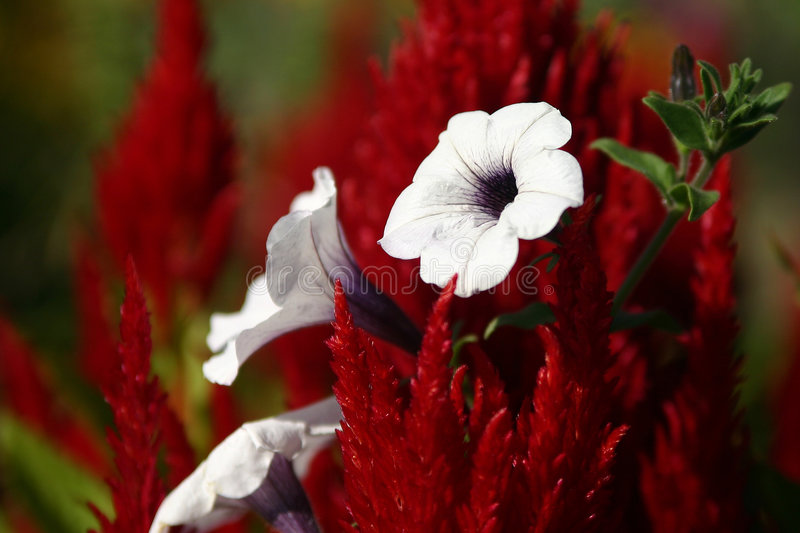 Weiß auf Rot stockfotografie