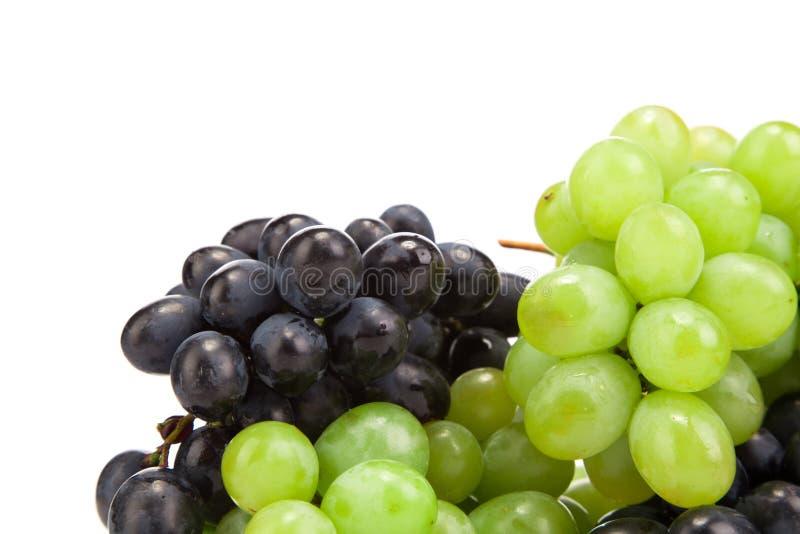 Weiß und blaue Trauben stockfotografie
