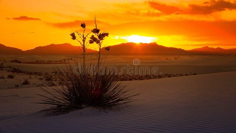 Weiß versandet Nationaldenkmal-Sonnenuntergang, New Mexiko - Timelapse stockbilder