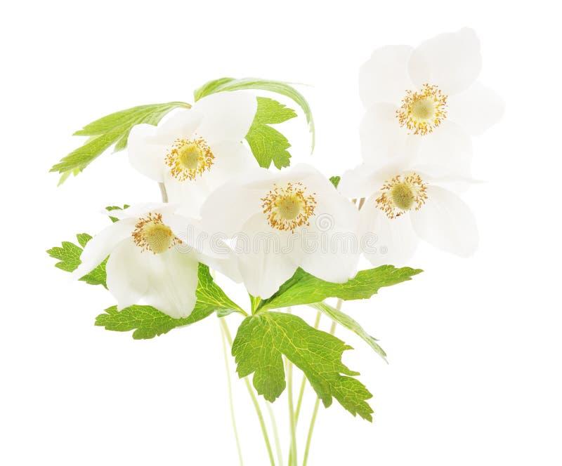 Weiße Anemone des Blumenstraußes lizenzfreies stockfoto