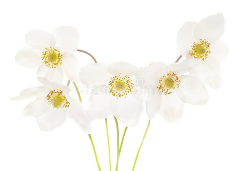 Weiße Anemone des Blumenstraußes stockfoto