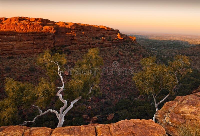 Weiße Bäume auf Klippenrand von König ` s Schlucht, Australien lizenzfreie stockfotos