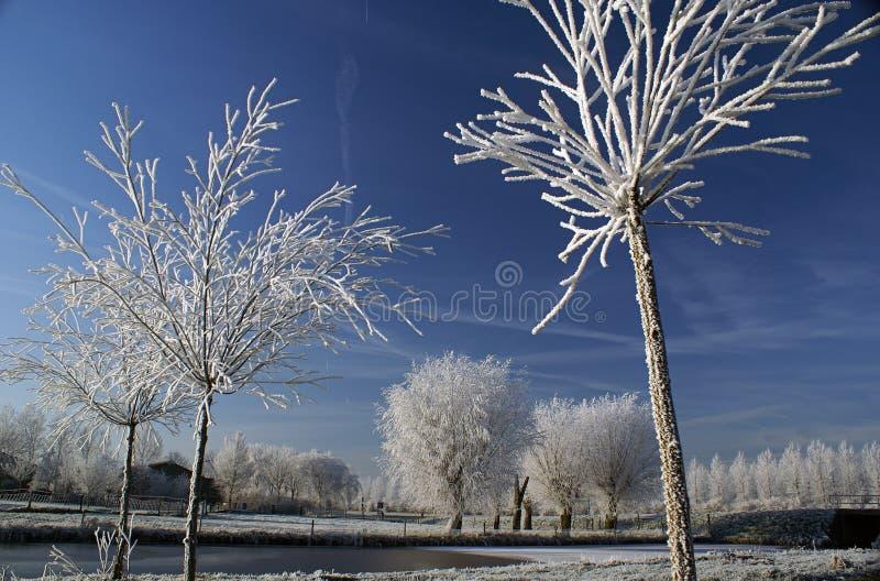 Weiße Bäume mit einem blauen Himmel stockbilder