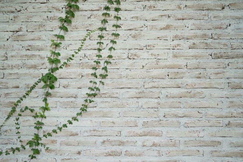 Weiße Backsteinmauer lizenzfreies stockbild
