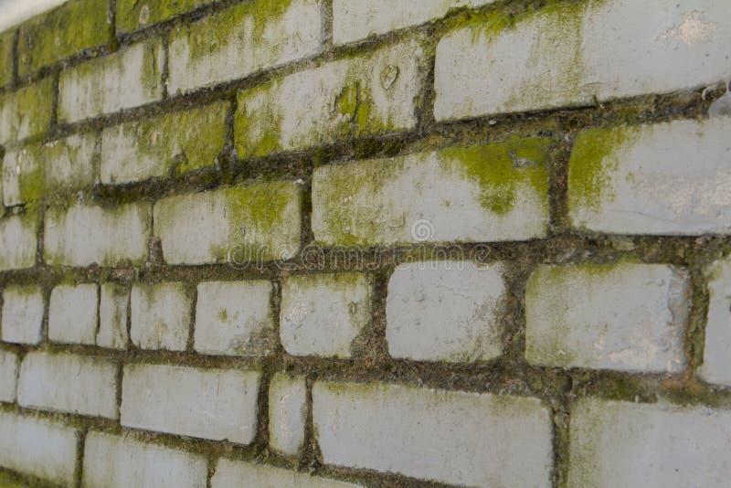 Weiße Backsteinmauer mit Form stockfotos