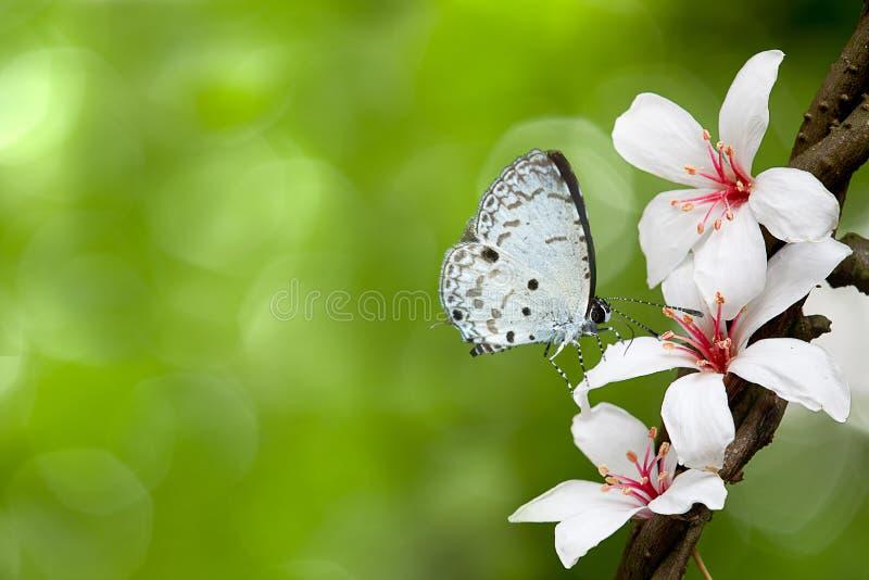 Weiße Basisrecheneinheit auf Blumen (Tung-Blüte) lizenzfreie stockfotografie