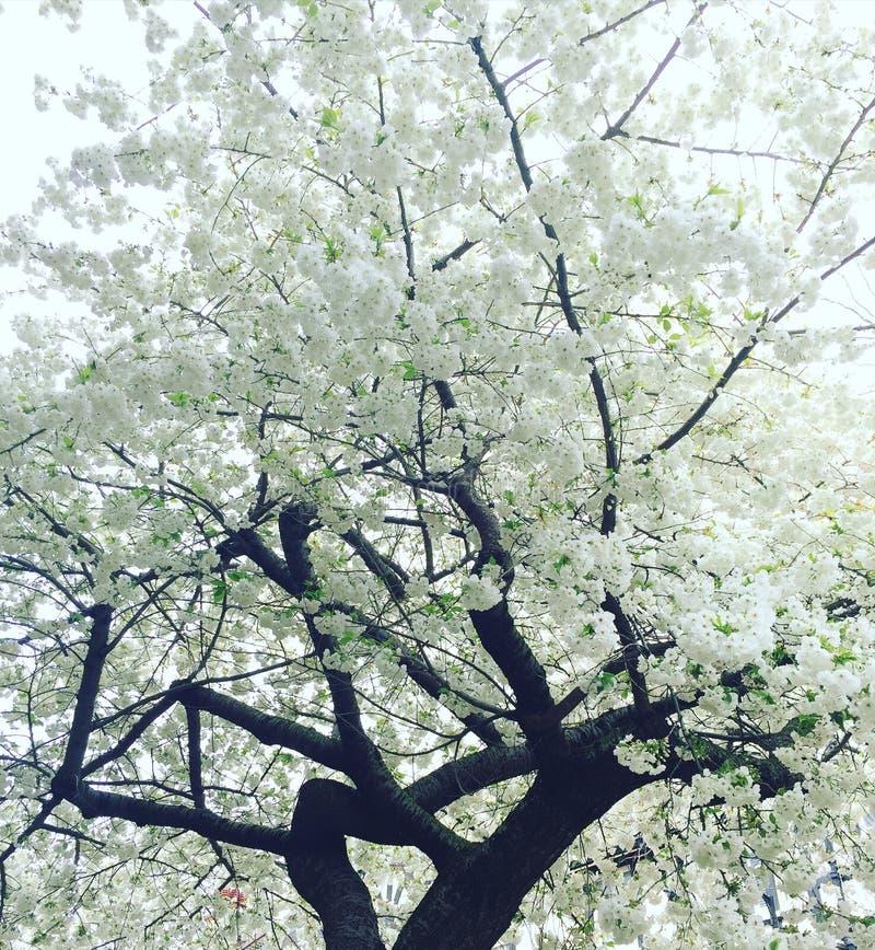 Weiße Blüte lizenzfreies stockbild