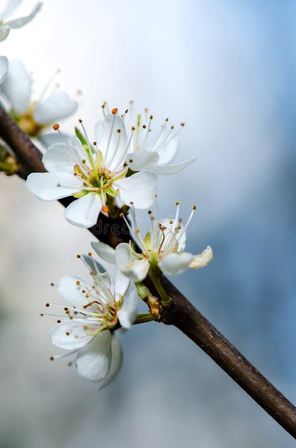 Weiße Blüte lizenzfreie stockfotos