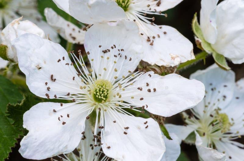Weiße Blüten stockfoto