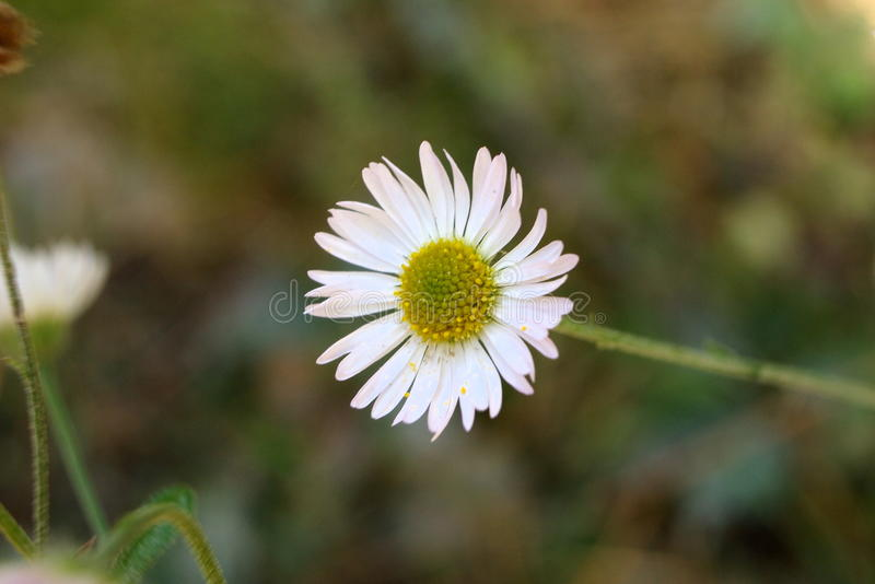 Weiße Blume 6 stockbild