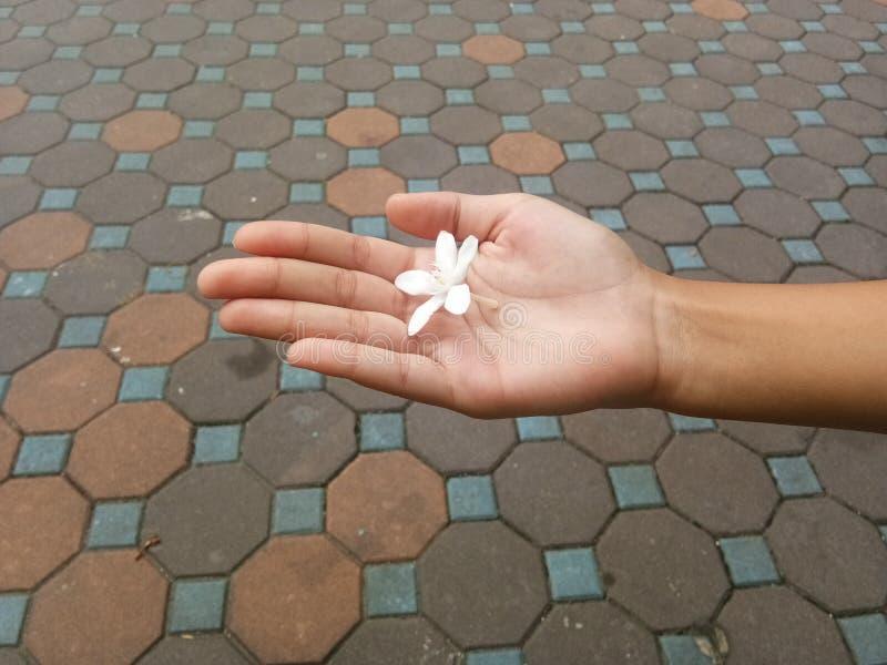 Weiße Blume auf der Hand lizenzfreie stockbilder