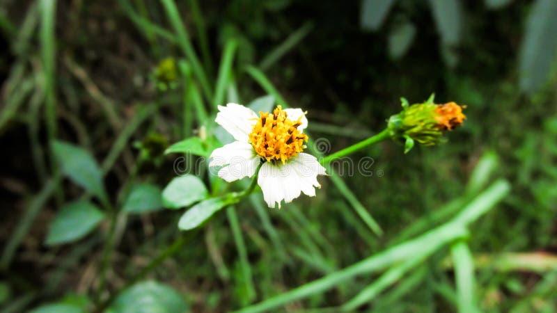 Weiße Blume in den Hügeln stockfotografie