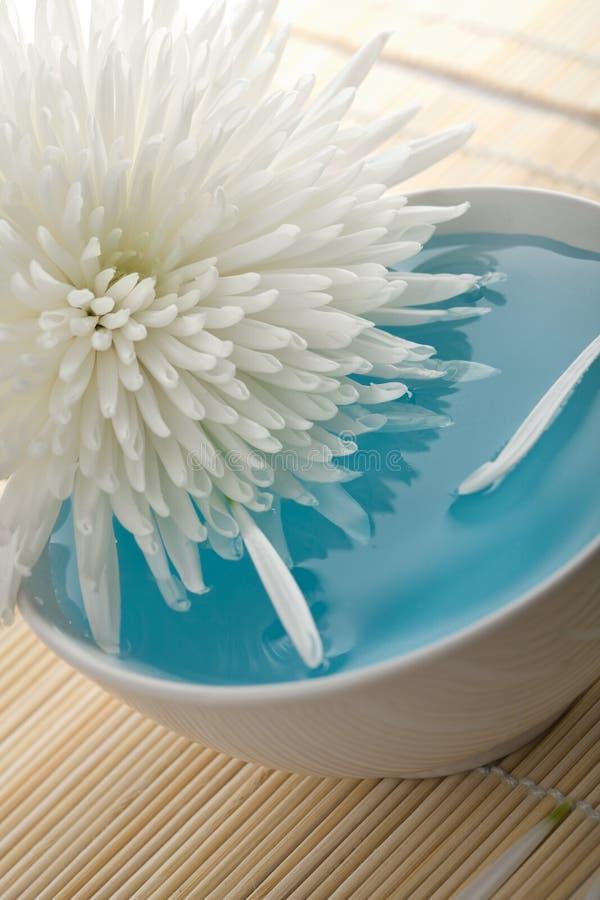 Weiße Blume, die in Schüssel schwimmt lizenzfreie stockfotografie