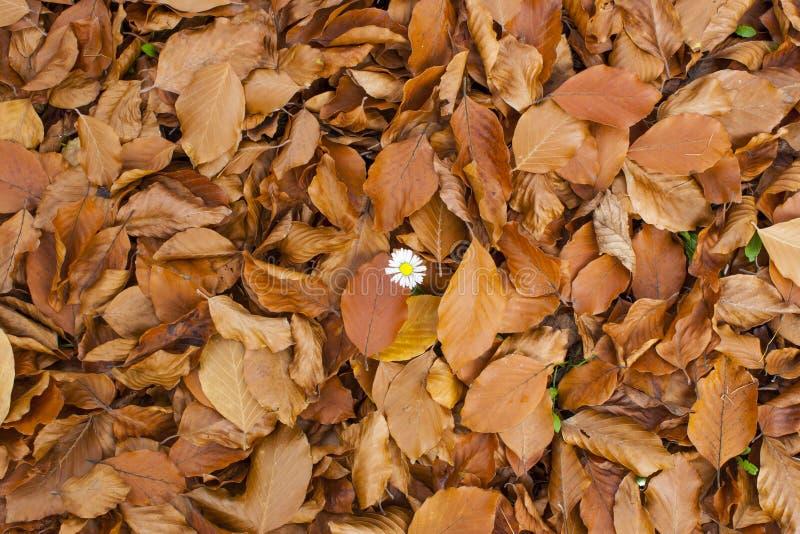 Weiße Blume in gefallenen Blättern stockfotografie