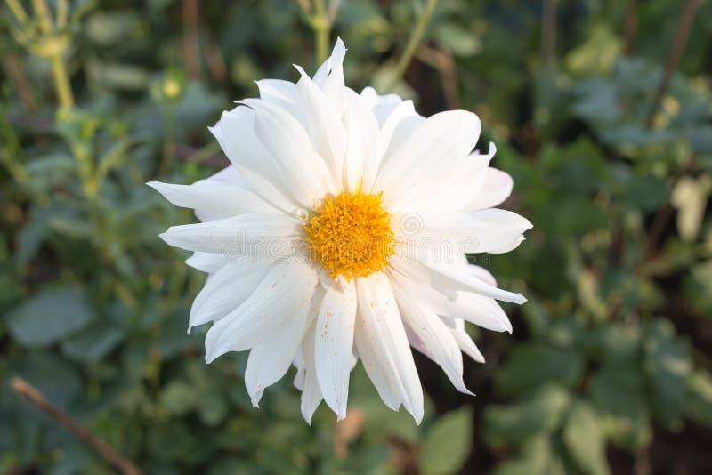 Weiße Blume im Park stockbild