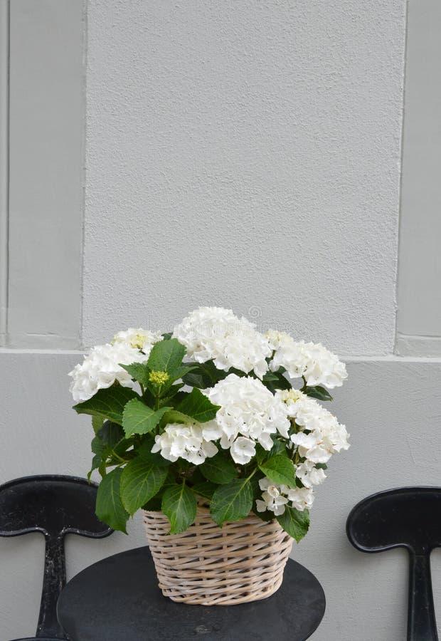Weiße Blume Im Topf Auf Dem Tisch Stockbild - Bild von erscheinen ...