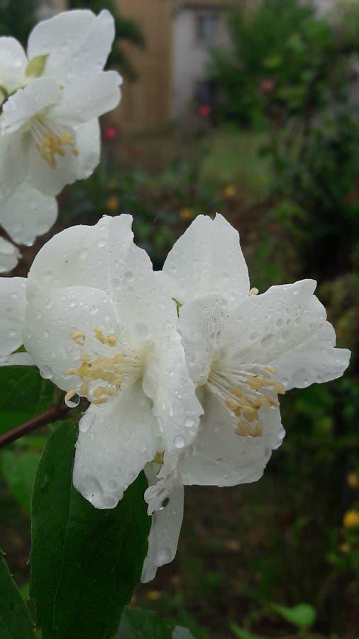 Weiße Blume im Wald lizenzfreies stockfoto