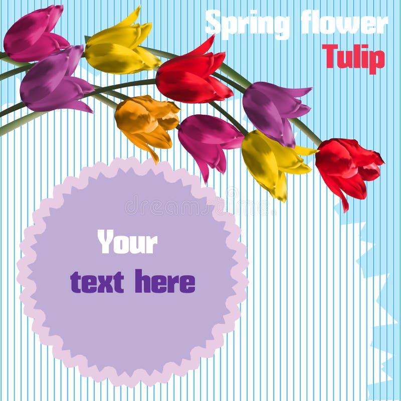 Weiße Blume im Wald Tulpe stock abbildung