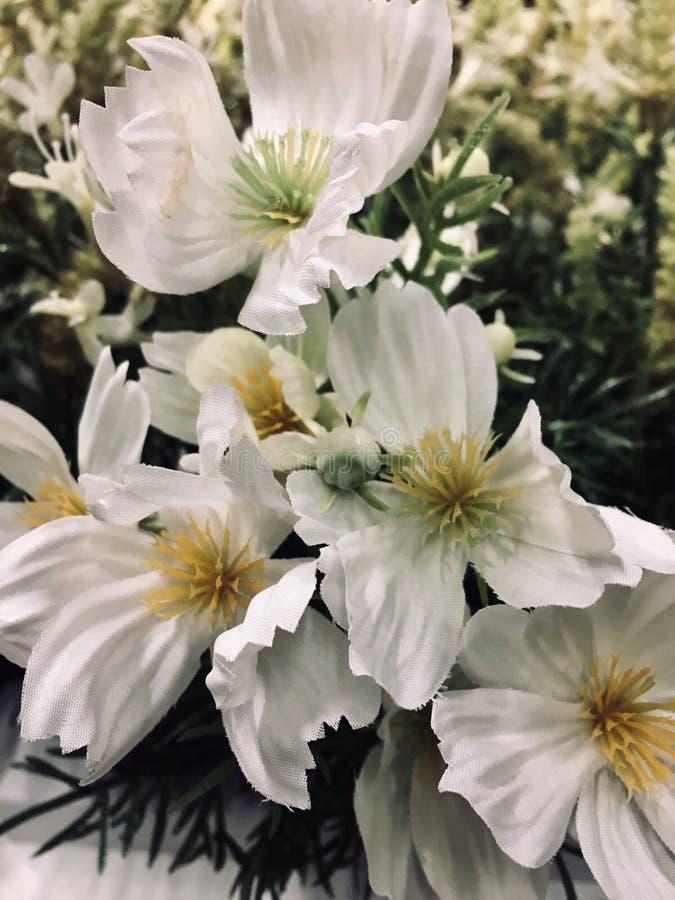 Weiße Blume ist Leben stockfoto