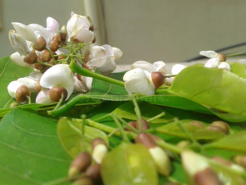 Weiße Blume mit grünem Hintergrund stockfotografie