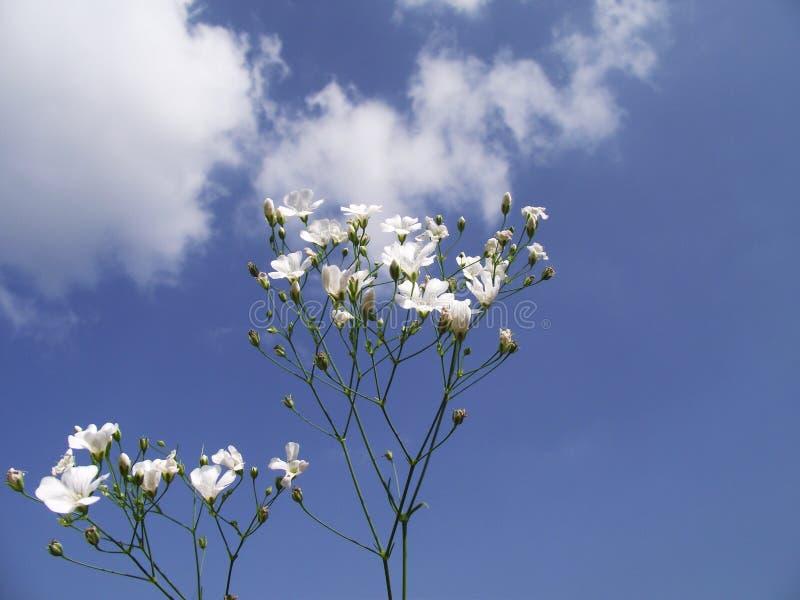 Weiße Blumen auf dem Himmel stockfotos