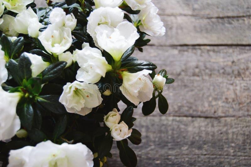 Weiße Blumen auf einem hölzernen Hintergrund stockfotografie