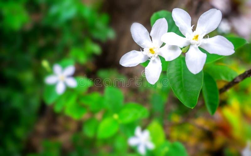 Weiße Blumen auf grünem Hintergrund 001 stockfoto