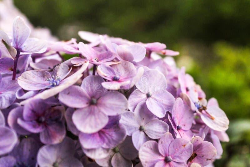 Weiße Blumen auf Himmelhintergrund lizenzfreie stockfotografie