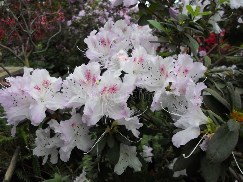 Weiße Blumen, Blumen Blühender Baum Im Frühjahr Weiße Blumen ...