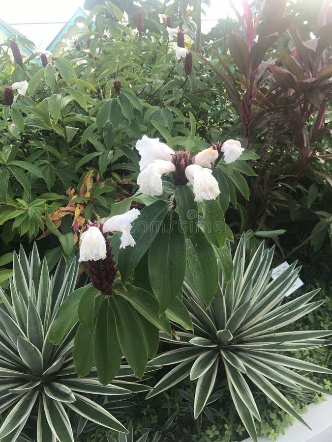 Weiße Blumen in Cozumel Mexiko stockbild
