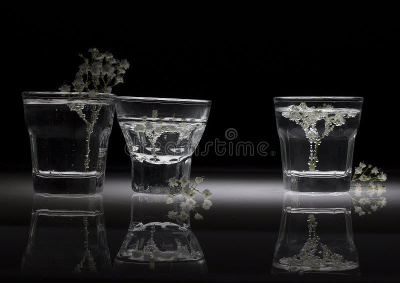 Weiße Blumen in den Gläsern mit Reflexion stockbilder