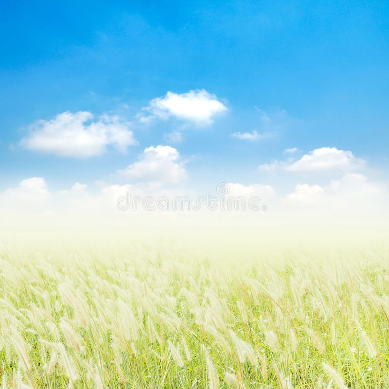 Weiße Blumen des wilden Grases und blauer Himmel stockbilder