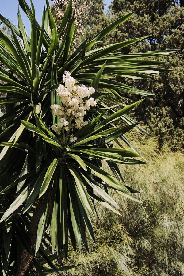 Weiße Blumen, Die Auf Einer Palme Blühen Stockbild - Bild von blumen ...