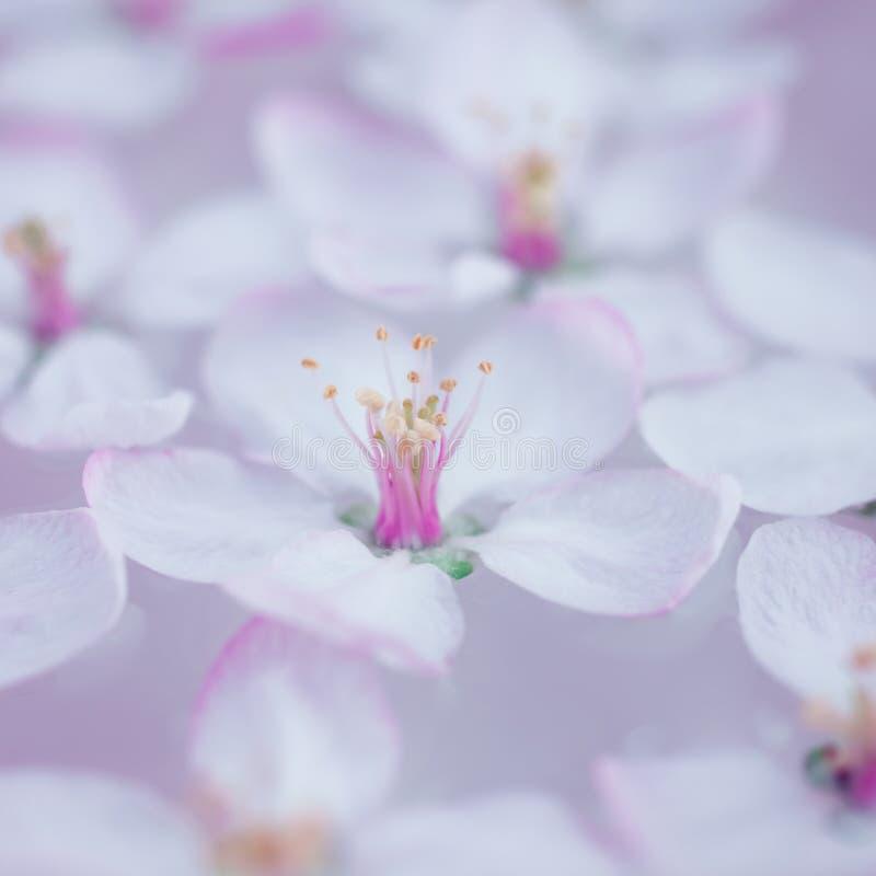 Weiße Blumen, die in Wasser schwimmen lizenzfreies stockbild