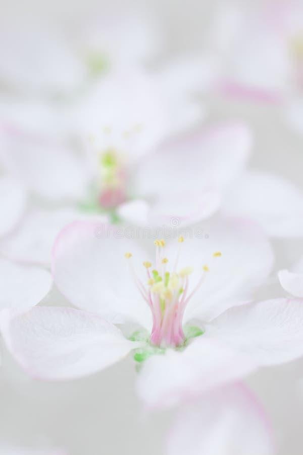 Weiße Blumen, die in Wasser schwimmen lizenzfreies stockfoto