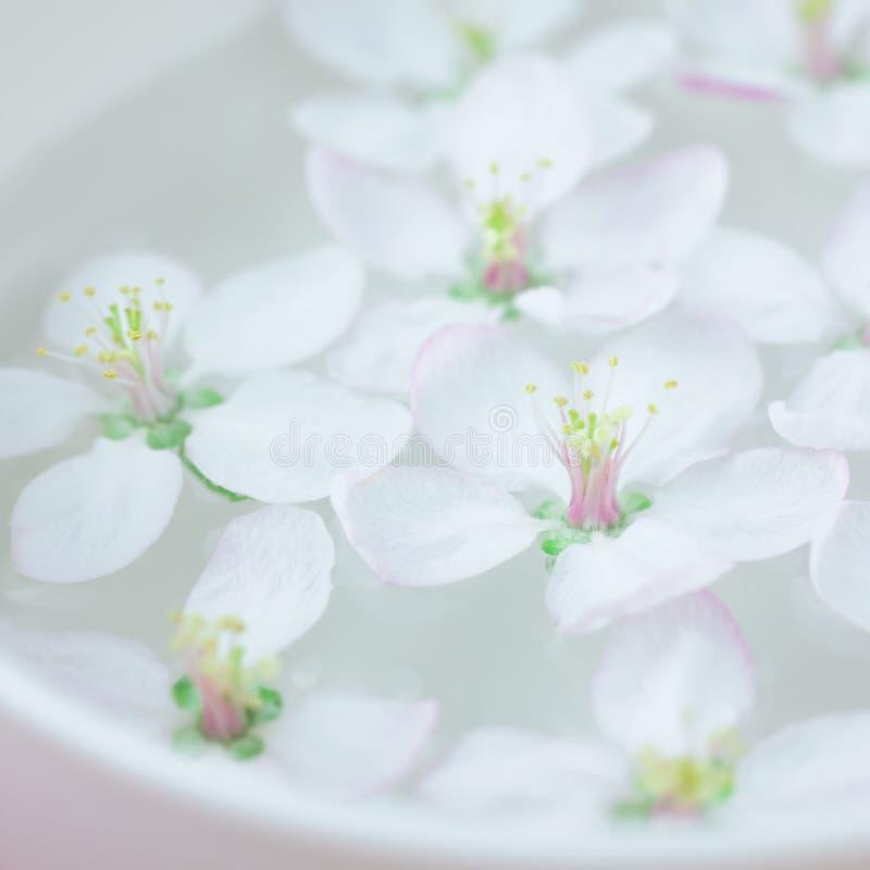 Weiße Blumen, die in Wasser schwimmen stockbild